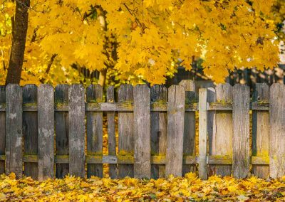 Fall leaves with a fence in Coeur d'Alene Idaho